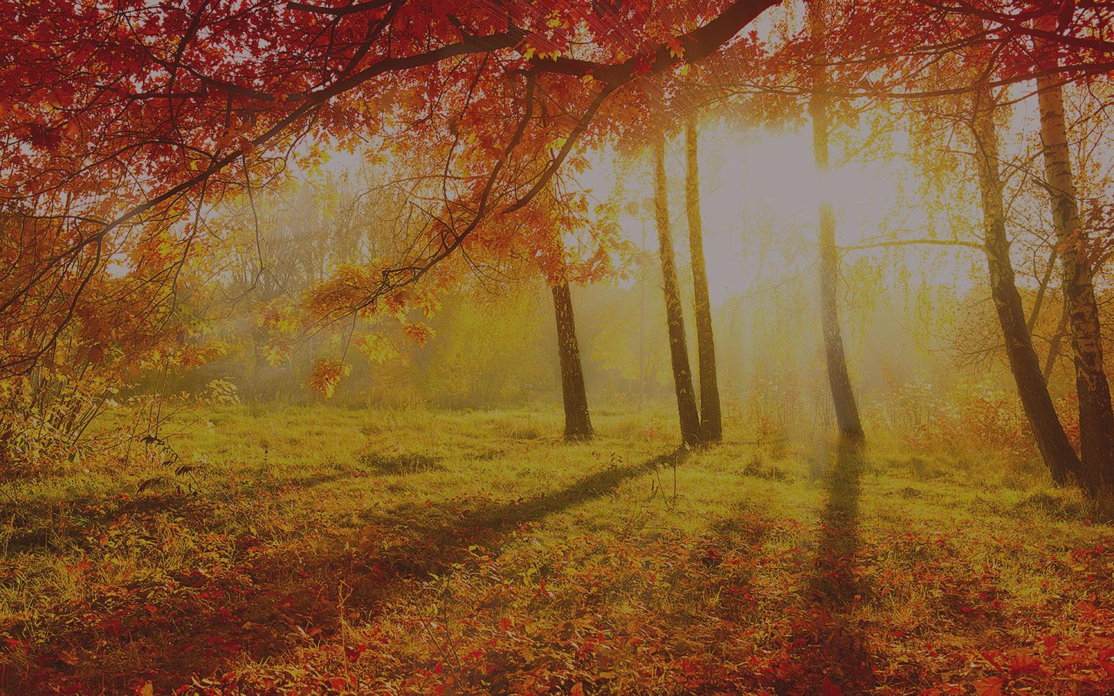Goldener_Herbst